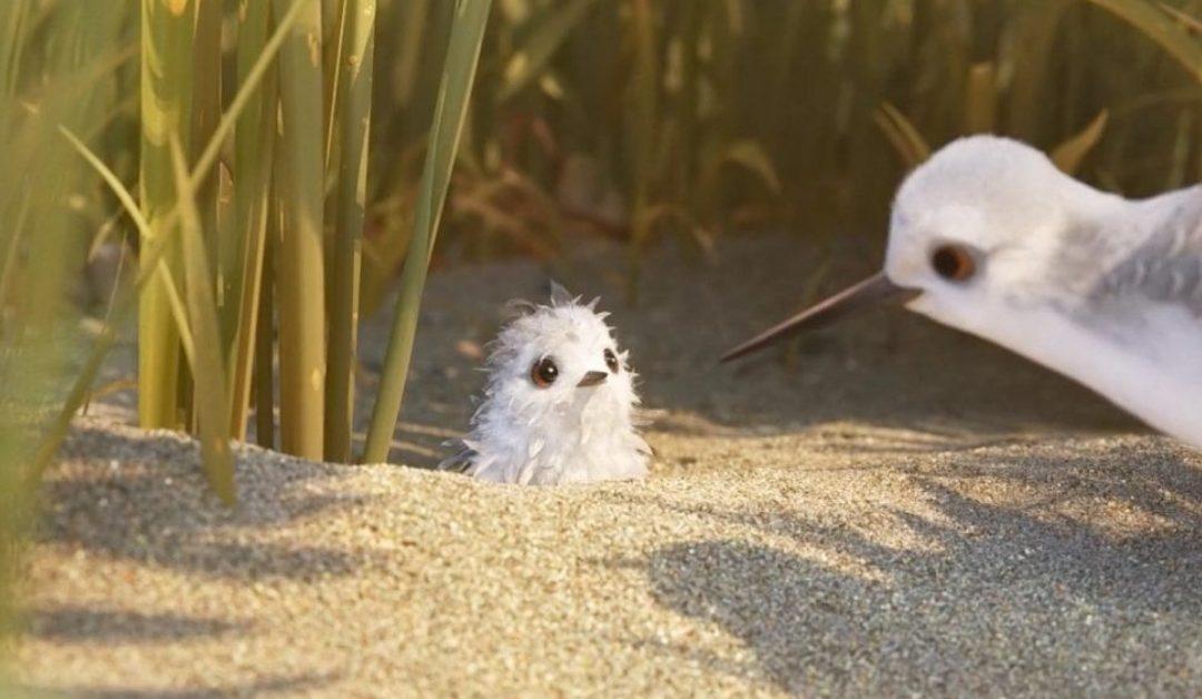 'Piper', el nuevo corto de Pixar como metáfora para enfrentarse a las barreras personales